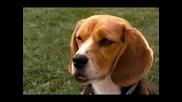 Котки и кучета - Бг Аудио ( Високо Качество) Част 3 (2001)