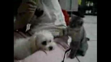 Котка - Hooligan