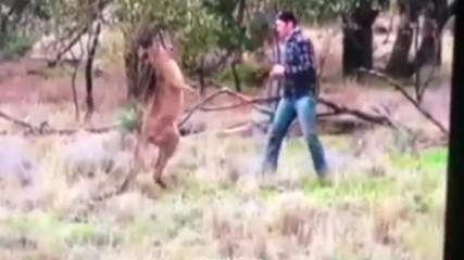 Мъж удари кроше на кенгуру, за да спаси кучето си
