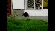 Котки си правят кефа