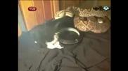 Изрод храни с живи котенца змиите си 16+