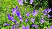 Цветна красота, която зарежда с енергия- снимки на Oгнян Hемски авторски - Koinova