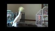 Папагал танцува на песни на Майкъл Джексън !