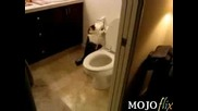 Cat - Flushes - The - Toilet