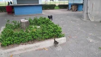 Огромно куче се стъписва от котка ,която е като нинджа бранеща малките си !
