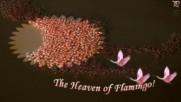 Раят на фламингото ...