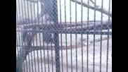 maimuni - 4.mp4
