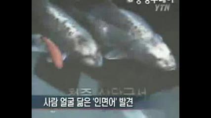 Риби С Човешки Глави
