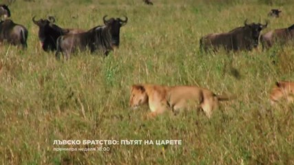 Лъвско братство Пътят на царете