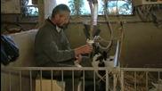 Памела Андерсън - част от кампания срещу угояването на гъски