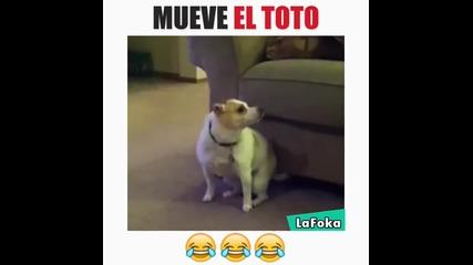Кучета танцуват на музика