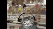 Луди Котки
