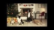 Кучета испълняват на живо-djinglbens