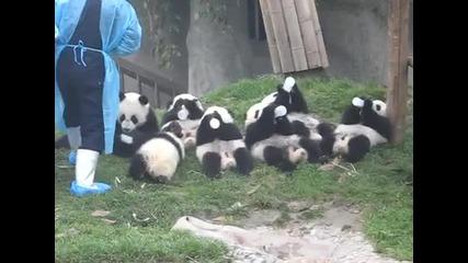 Сладки Бебета Панди