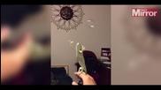 Хамелеон лови сапунени мехурчета