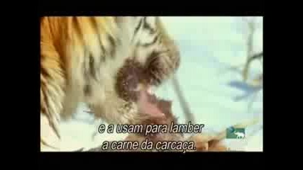 Сибирските тигри 2