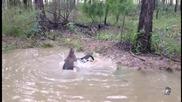 Кенгуро се опитва да удави куче