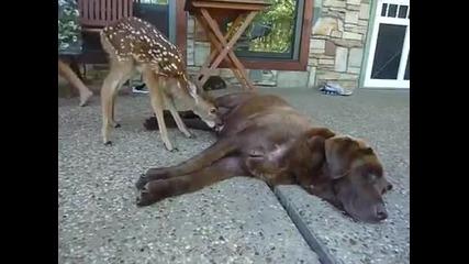 Прекрасно: Сираче сърничка, кърмена от куче.