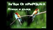 Звуци от природата - Птици и дъжд