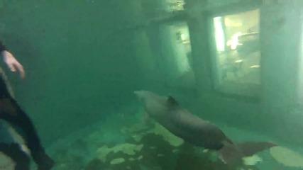Чувството да плуваш с делфин