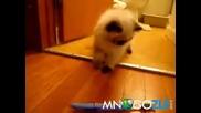 Котка срещу четка за зъби - смях!