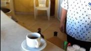 Чай или кафе ?
