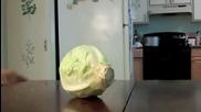 Кученце си гризка зеленце