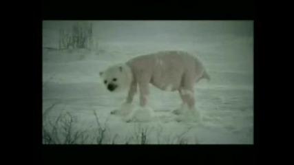Проблемите На Глобалното Затопляне