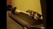 Котки На Бягаща Пътека