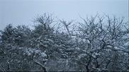 Coldworld - Winterreise