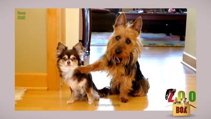 Най-тъжните физиономии! Кучета пакостници, хванати на местопрестъплението!