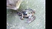 Котка и много странна жаба