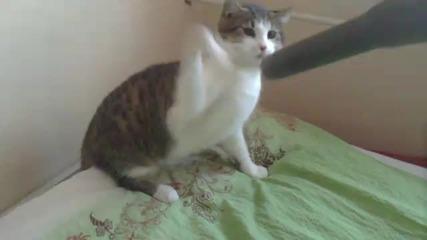Тази котка мрази прахосмукачки:)