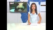 Разхлаждат панди с блокчета лед