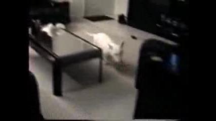 котка vs. куче (настървена котка) +smqhh