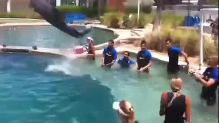 Делфин вкарва гол на Валдес