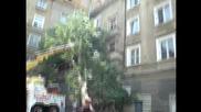 Автокомплекс Димитров - изправяне и отстраняване на съборен от бурята 15 м кестен 25.06.2014