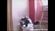 Котка Метъл