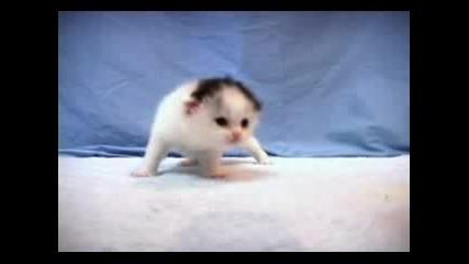 Сладко котенце в обувка
