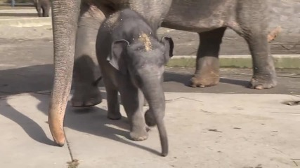 Вижте първата една година на слончето Лили в 2 минути