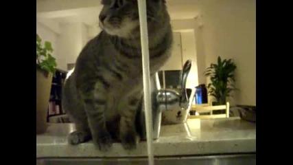 Котка се къпе сама !
