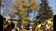 Есен в Пловдив - 2010г