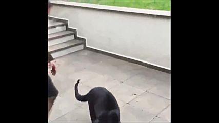 Пантера дебне мъж в засада ,но нещо се обърква