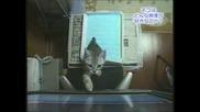 Котки Гонят Топче На Телевизора