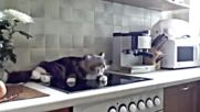 Котка се жалва Никифър :))))