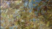 Mehdi -- Faling Leaves - Листопад