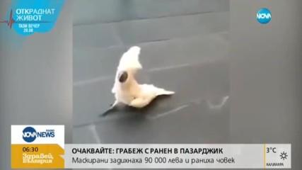Папагал лае като куче