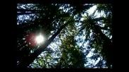 Народна Песен От Родопите - Горице Ситна Зелена