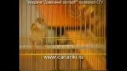 Канарчета - Домашен Зоопарк - 2 част