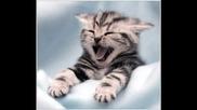 Mного слади котета